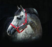 Capezza Horseware Field Safe
