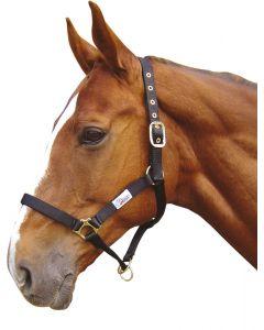 Controller Harry's Horse Halter