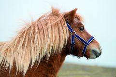 Capezza Horseware Amigo Petite