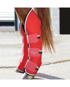Stivali per il tendine e il nodello Horseware Amigo
