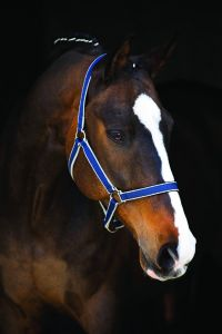 Cavezza Horseware Amigo