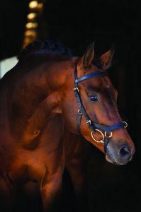 Multi Horseware Rambo Micklem