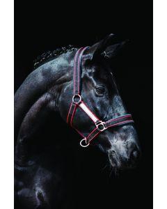 Capezza Imbottita Horseware Rambo