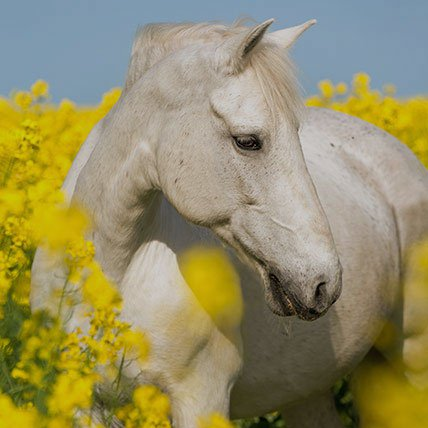 Coperte a partire da 165 cm (Cavallo)