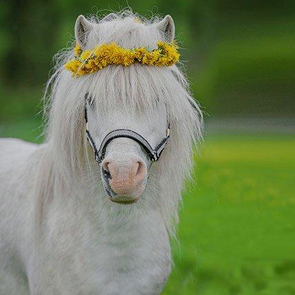 Coperte per cavalli fino a 165 cm (Shetland)