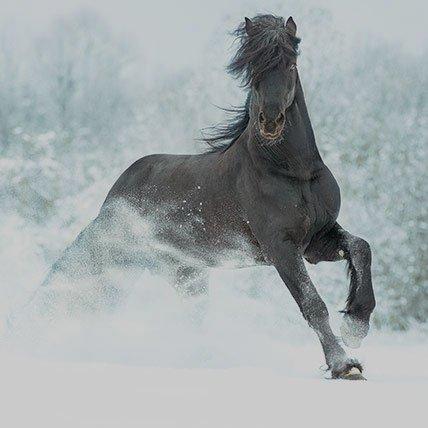 Coperte invernali da 165 cm (Cavallo)