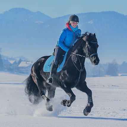Abbigliamento e accessori equestri